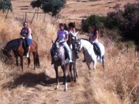 Day of route in different horses