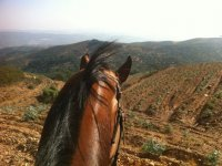 The horizon from the equine