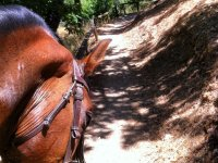 Climbing the trail with the horse