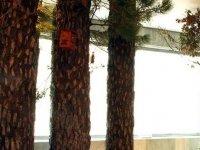Representacion del bosque