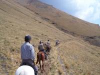 在路径上的路径巴塞罗那与马匹