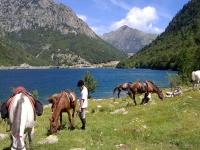 在Cardedeu中休息的马匹