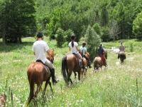在巴塞罗那骑马接近森林