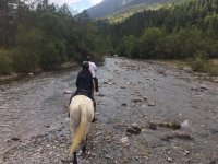 在马背上跟随河