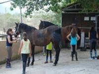 营地中的马匹护理