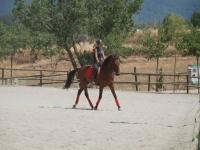 在马术营地中骑马