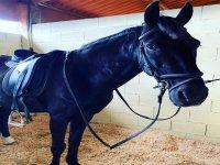 Nuestro precioso caballo negro