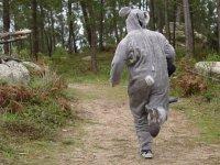 ¡Escapa, conejo!