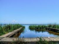 Vegetazione del fiume Ebro