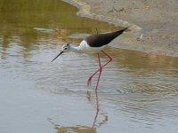 Fauna del Parco Naturale dell'Ebro