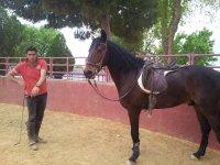 在塔兰孔斗牛场与马一起训练
