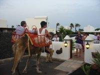 Boda Camello