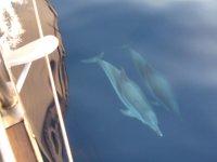 Los cetaceos