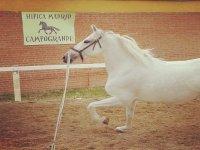 Uno de nuestros caballos blancos