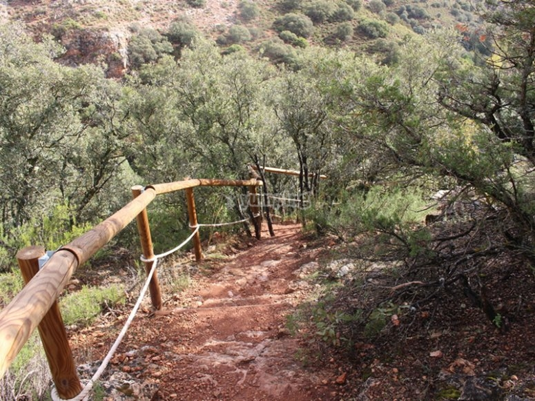 Flâner dans les environs de la Quebrada del Toro taureau