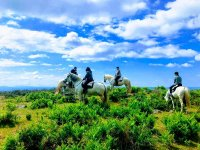 Ruta a caballo guiada por Alhaurín de la Torre 1 h