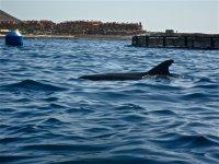 Cetaceos en aguas de Canarias