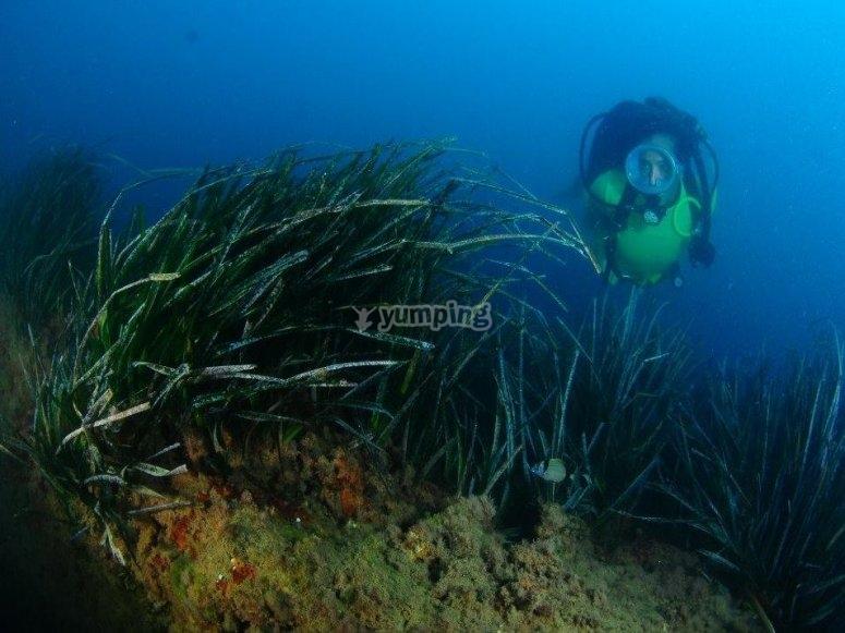 在植被中潜水
