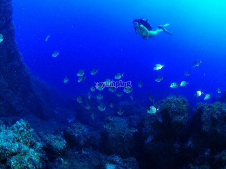 在马扎龙的潜水过程