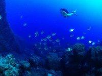 Mazarron潜水过程