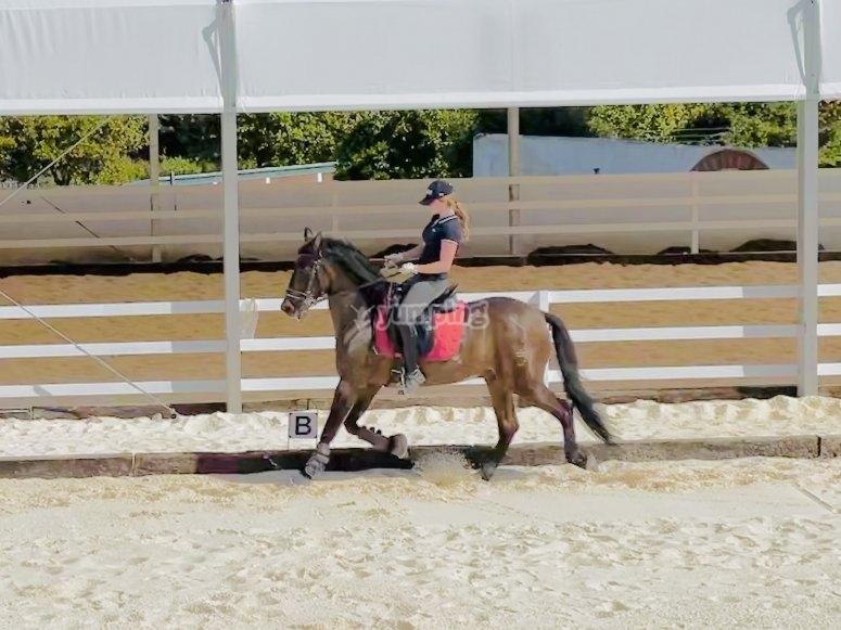 Campi di equitazione per bambini a Malaga
