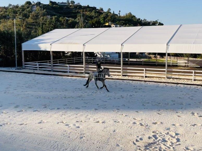 Imparare l'equitazione a Malaga