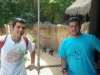Gorilla e scimmie