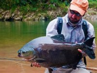 hombre ensenando un pez grande