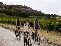 cyclists between vineyards
