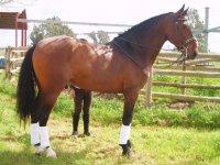 Uno de nuestros flamantes caballos