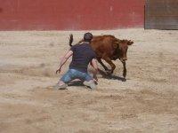 De rodillas con la vaca
