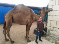 Camel routes for adults and children