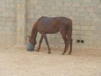 horse in the horse race Valencia