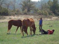 年轻人看着两匹马.jpg