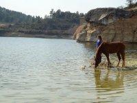一匹马喝水的女孩。