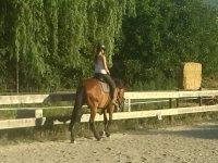 在我们的设施中散步--999-准备骑马