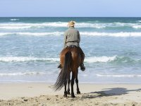 Horse riding route to Es Trenc beach and lunch 8 h