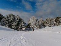 雷阿尔城的雪橇游览