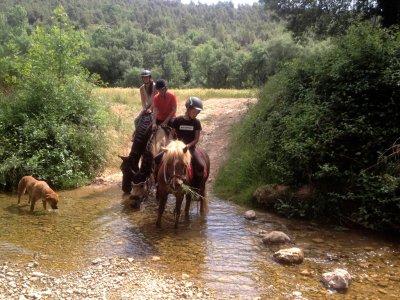 Cavalls de Baldomar
