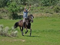 caballos adiestrados