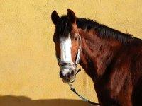Precioso caballo