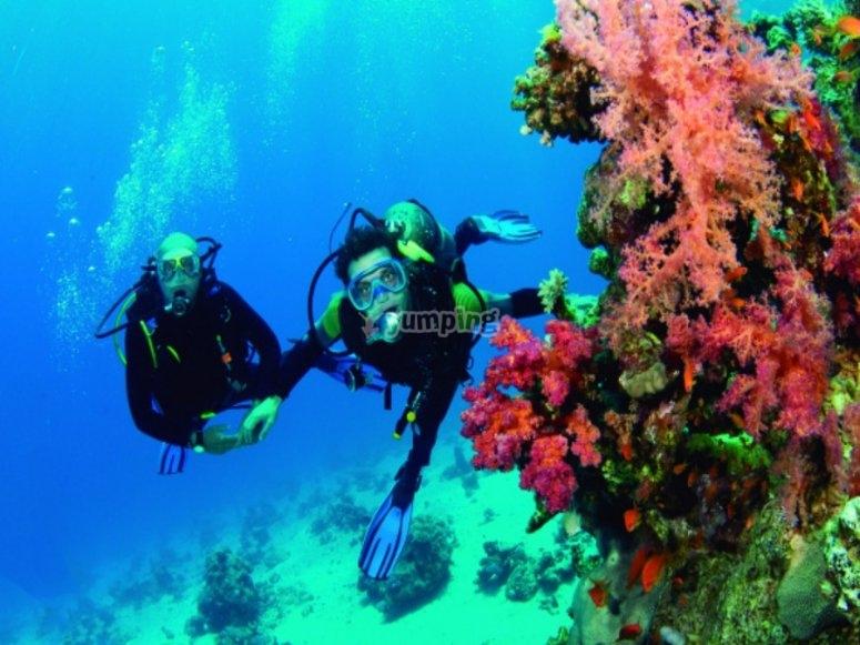在科斯塔布兰卡潜水开始