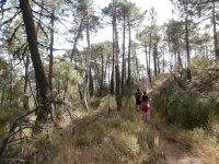 Caminando en el bosque en Ciudad Real