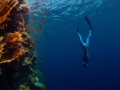 Inmersión de buceo simple en la costa de Jávea