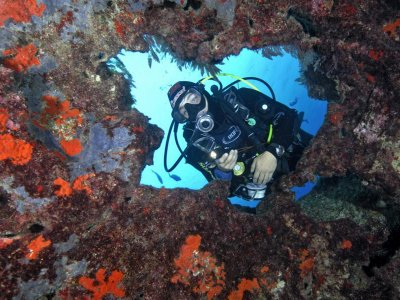 De 1 a 3 inmersiones con tu equipo a Isla de Lobos