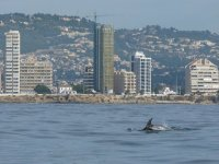 Dolphins in Calpe