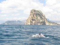 Dolphin at the tip of penon