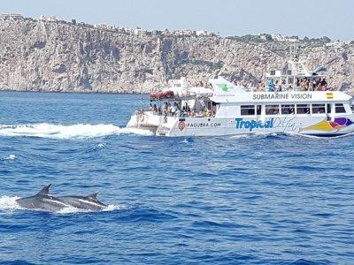 3月营地上的海豚观赏和午餐