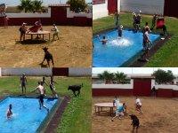 Juego toro al agua