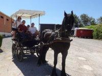 乘坐黑色骏马的马车